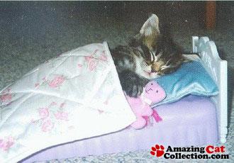 bedtimecat