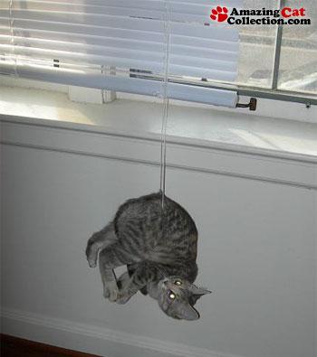 bungee-jumper