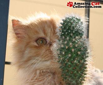 cactus-encounter