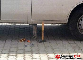 car-repaircat