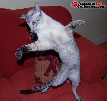 cat-dance