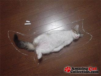cat-scene-investigation