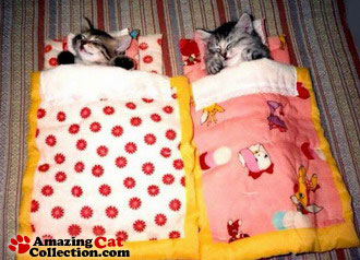 catcamping