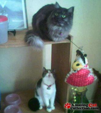 cats-eye-view
