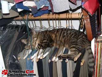 closetcat