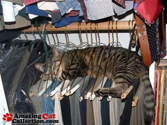 closetcat