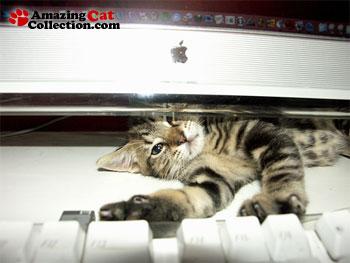computer-creature