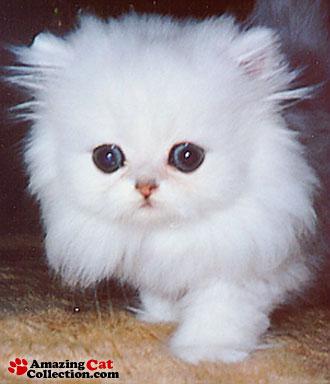 cute-as-can-be-kitten