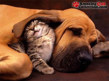 ear-blanket