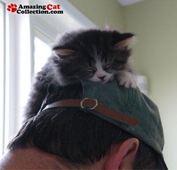 first-class-nap