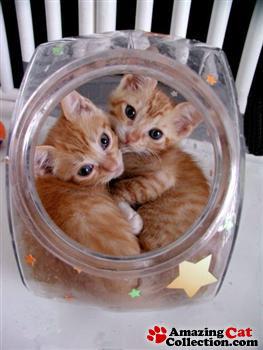 fishbowlcats