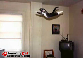 flight-of-the-catinator