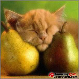 fruitydreams