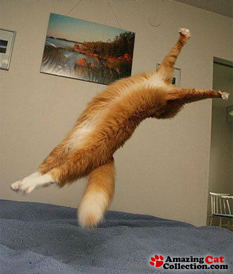 gymnastic-cat