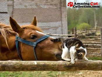 horse-sniff