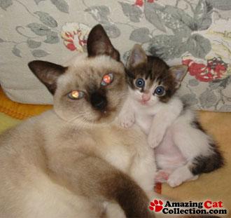 kittenbaby
