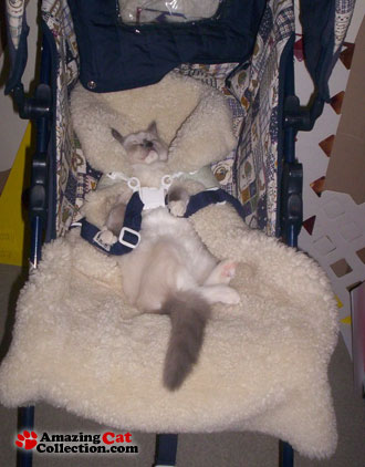 kitty-carriage