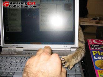 laptoptrap