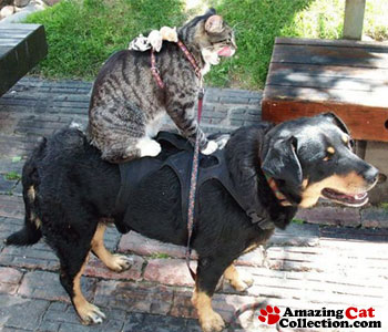 mice-on-cat-on-dog