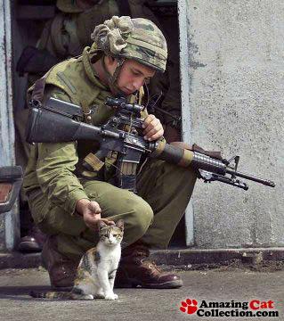 militarycat