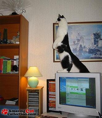 night-watch-cat