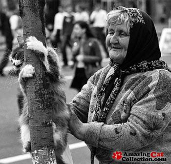 park-lady-cat