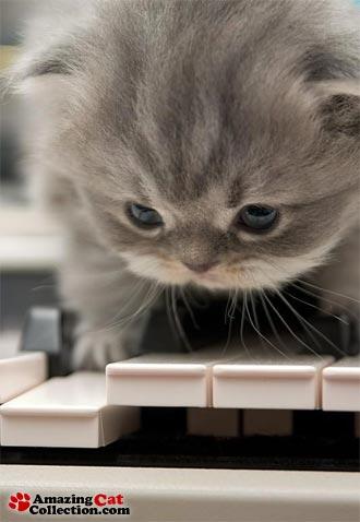 pianistkitten