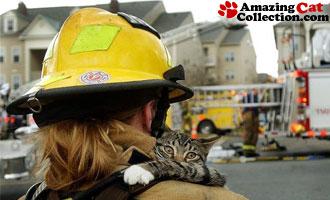 rescued-cat