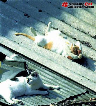 rooftoprelaxing