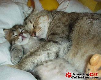 spooningcats