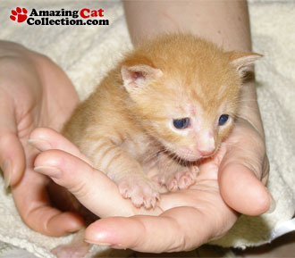 tiny-handful
