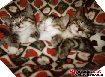 triple-nap