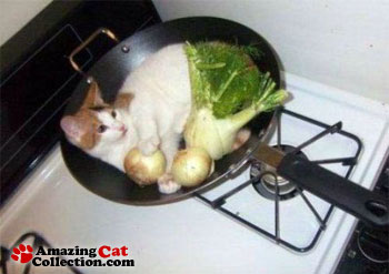 wok-bed
