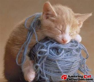 yarnballkitten